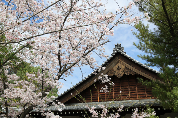 石尾山弘法寺の桜2016