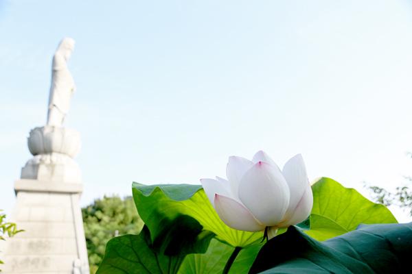 弘法寺の大賀蓮