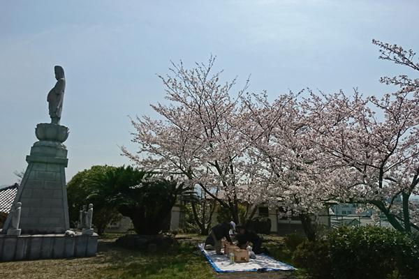 石尾山でお花見
